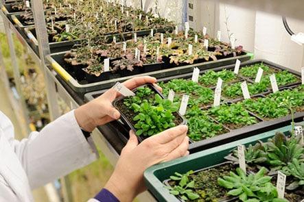 témoignages métiers culture d'Arabidopsis